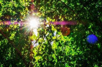 leaves-3521090_960_720