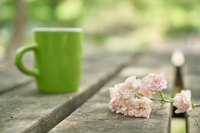 flower-3489467_1920